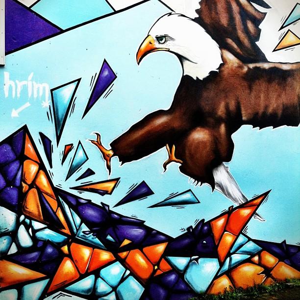 Bald eagle, Iceland style. #latergram