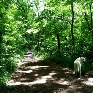 Path, journey, how you walk it, etc. #MosesTheYogaDog